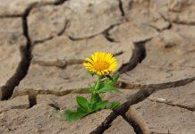 résilience en situation de stress